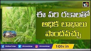ఈ వరి రకాలతో అధిక లాభాలు పొందవచ్చు | This Type Varieties Earning High Profits in Paddy Cultivation