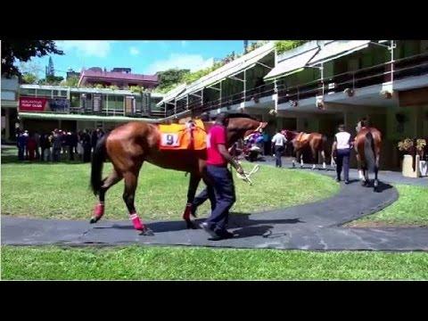 Horse Racing Fervour In Mauritius
