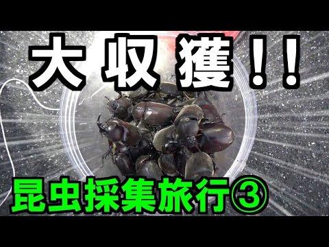 【カブトムシ・クワガタ】 昆虫採集旅行 2016年8月上旬 ③街灯×かぶくわホイホイ