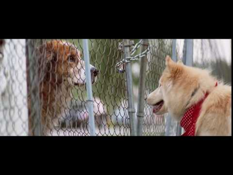 A Dog's Purpose - Official 15 Second Movie Trailer HD - Trailer Puppy