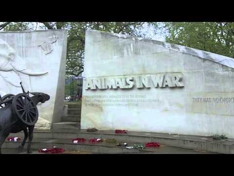 Animal War memorial Hyde Park
