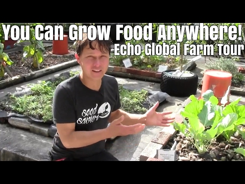 You Can Grow Food Anywhere! Tour of Echo in South Florida Gardening