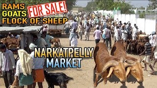 Rams, Goats, Male goats, Flock of Sheep for sale | Narkatpelly Bakra Mandi 16-11-2018
