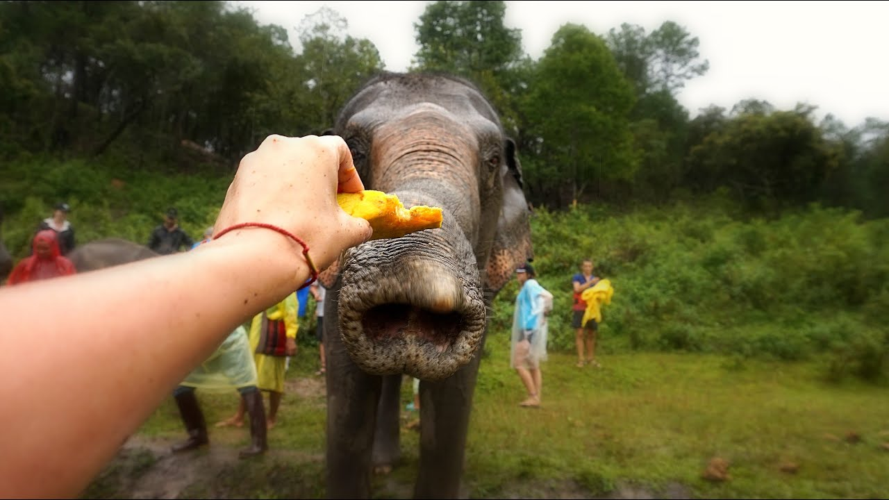 A DAY IN ELEPHANT SANCTUARY | My 1st Time Feeding and Touching Elephants in THAILAND