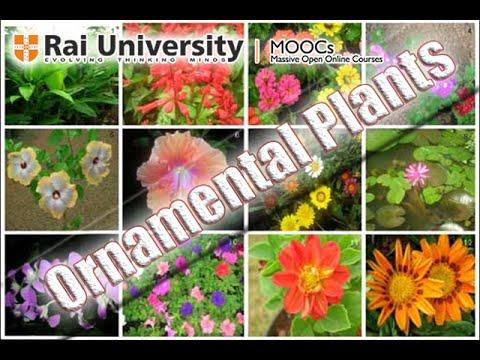 Identification of Ornamental Plants - Basics of Gardening