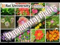 Identification of Ornamental Plants - Basics of Gardening
