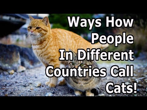 How Different Countries Call For Cats' Attention!