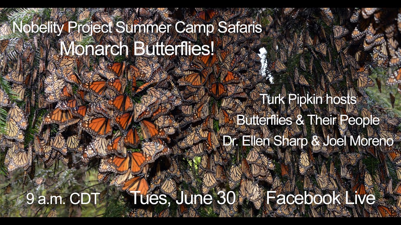Summer Camp Safari - Monarch Butterflies with Butterflies and Their People