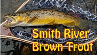 Streamer Fishing for Wild Browns on the Smith River