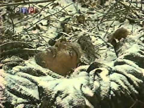 Война в Чечне 6 рота