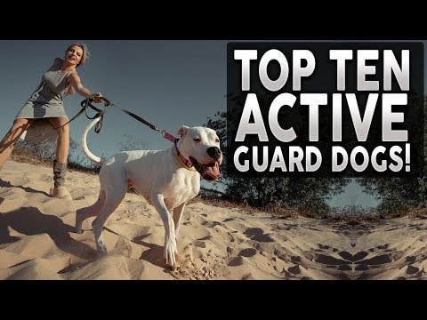 top-10-guard-dogs-for-active-people
