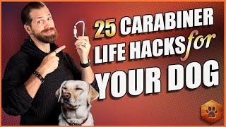 best dog accessory 25 carabiner life hacks for your dog