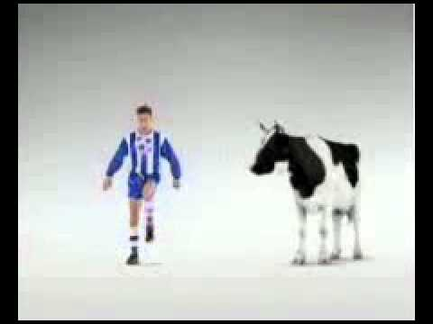 football wit a cow