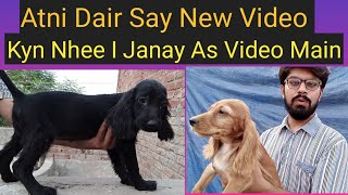 Cocker Spinal Puppy For Sale In Faisalabad Toy Breed Best Cocker Spinal +923015014241
