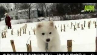 《狗狗101》美國愛斯基摩犬 (一) 20:00