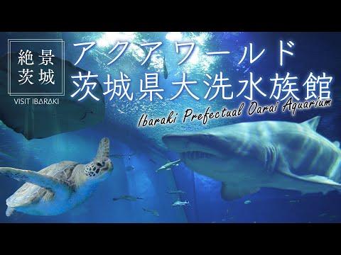 【絶景茨城】アクアワールド 茨城県大洗水族館 VISIT IBARAKI,JAPAN