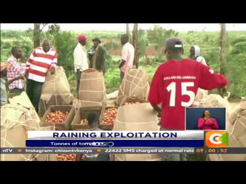 Tonnes of tomatoes rot away in Laikipia County