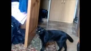 Коты деруться под Рой Джонса