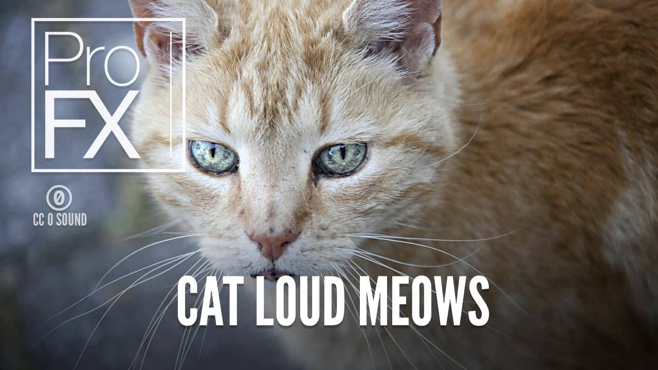 Cat Loud Meows | Animal Sound Effects | ProFX (Sound ...