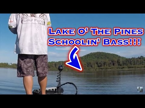 Bass Fishing Lake O' The Pines: Tournament Preparation