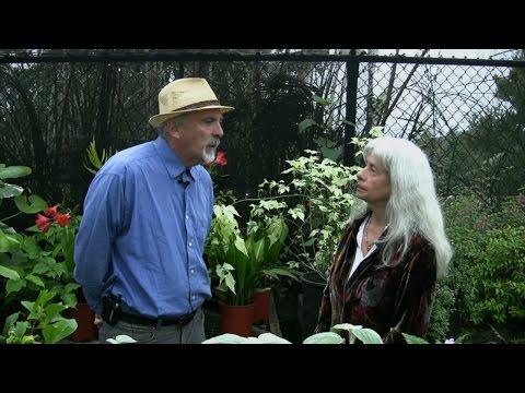 Green Gardens To Chocolate: Episode 2