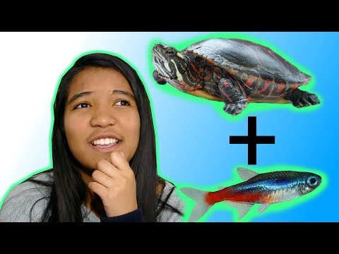 TURTLES AND FISH! - Best Tankmates For A Turtle | Turtle 101