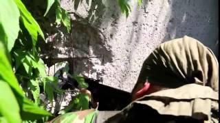 Война видео Украина Донбас  АТО Завязался бой батальона  Сомали  и ВСУ   YouTube