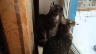 Таинственный разговор котов
