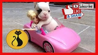 Cute Is Not Enough! Funny Cats and Dogs Videos Compilation! Perros y Gatos Recopilación