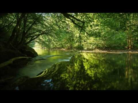 Robert Schumann - Träumerei (string version)
