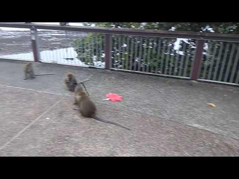 Monkey at woodland waterfront Singapore