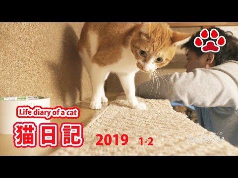 【猫日記】みゃうさんと猫達 キャットウォークの手直し  Cat diary January, 2019 Rework of catwalk