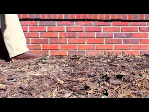 Allgood Pest Solutions - Termite Protection for Your Home
