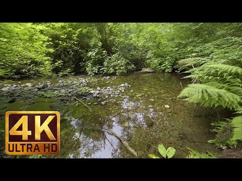 Deep in the Forest 4K (Ultra HD) Relaxation Video | 1,5 Hour Soothing Water Sounds and Birds Singing