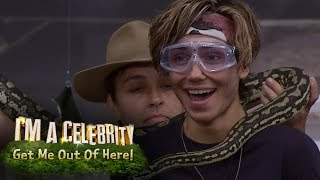 George Shelley Rips Open Pig