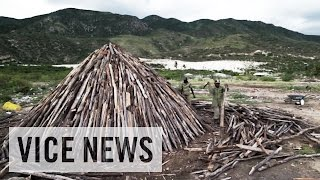 Black-Market Charcoal Trade: The Lake That Burned Down A Forest (Part 3)