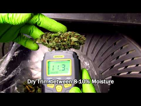 How To Measure a Cannabis Bud's Moisture Content