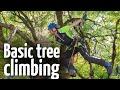 Simple & safe tree climbing ascent technique