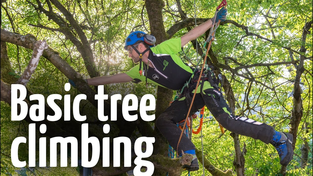 Simple & safe tree climbing ascent technique