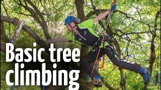 Video Simple & safe tree climbing ascent technique download MP3, 3GP, MP4, WEBM, AVI, FLV Desember 2017