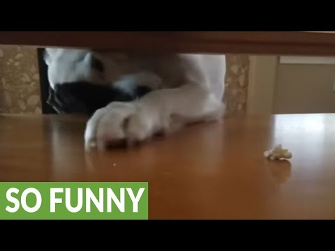 Determined dog can't quite reach popcorn