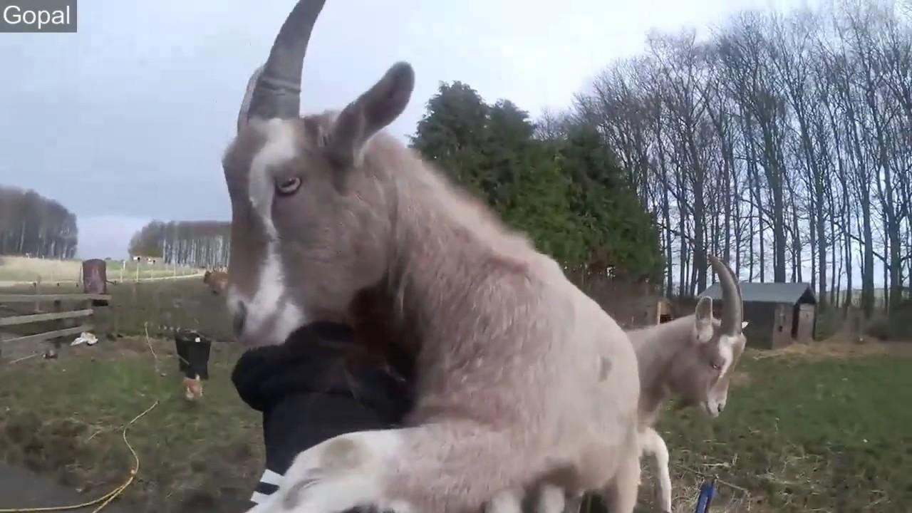 Animal Hugs And Love YouTube - 25 heartwarming moments animals hugging
