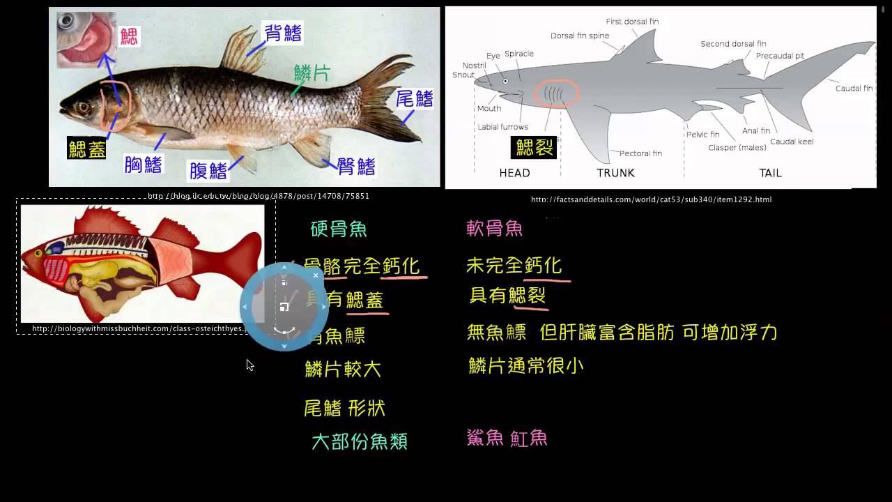 動物界-脊索動物門-魚類- YouTube