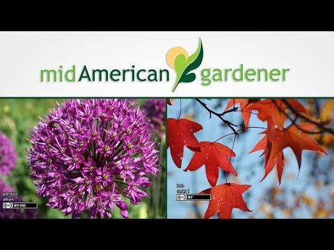 Mid-American Gardener with Sandy Mason, March 29, 2018