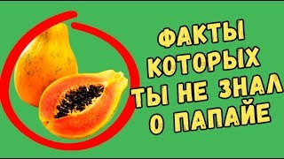 пАПАЙЯ ФРУКТ/ПОЛЬЗА ФРУКТА ПАПАЙА