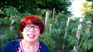 Как растут мои помидоры| Органическое земледелие(Как растут мои помидоры и много ль требуется им внимания? http://youtu.be/OcidQ9JmlxM Органическое земледелие, Севастоп..., 2015-06-30T11:50:35.000Z)