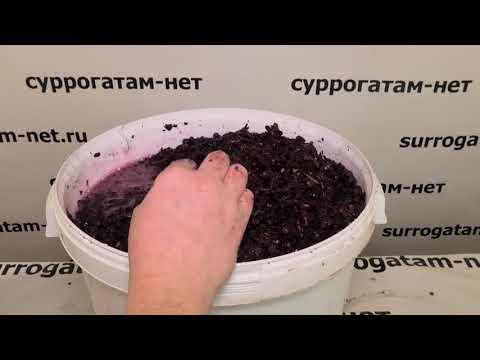 Чача приготовление в домашних условиях без дрожжей