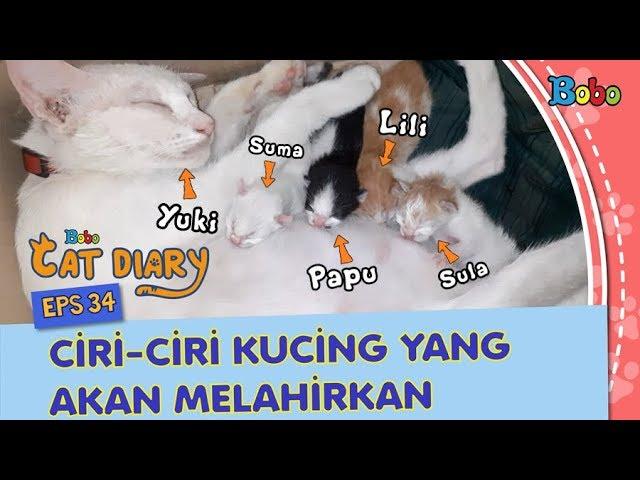 Kucing Lucu Ciri Ciri Kucing Yang Akan Melahirkan Bobo Cat Diary Eps 34 Youtube