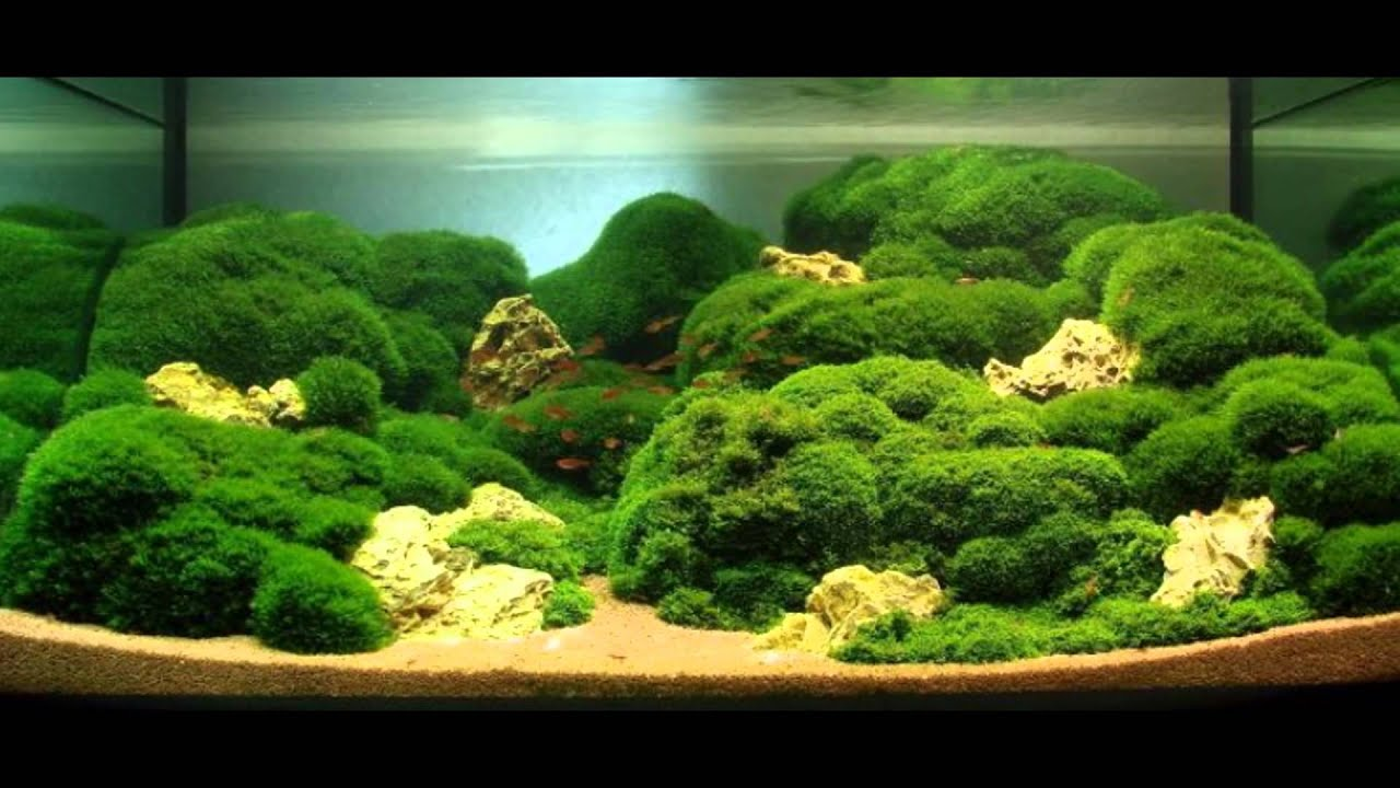 Indoor Water Gardens Indoor water garden inspiration aquascape youtube indoor water garden inspiration aquascape workwithnaturefo
