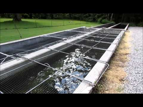 A Day At The Trout Hatchery- Tellico Plains, Tennessee
